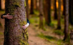 sostenibilidad medio ambiente agloval